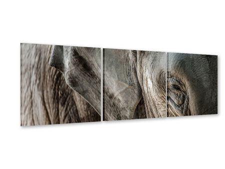 Panorama Acrylglasbild 3-teilig Close Up Elefant