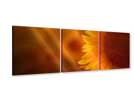 Panorama Acrylglasbild 3-teilig Macro-Sonnenblume