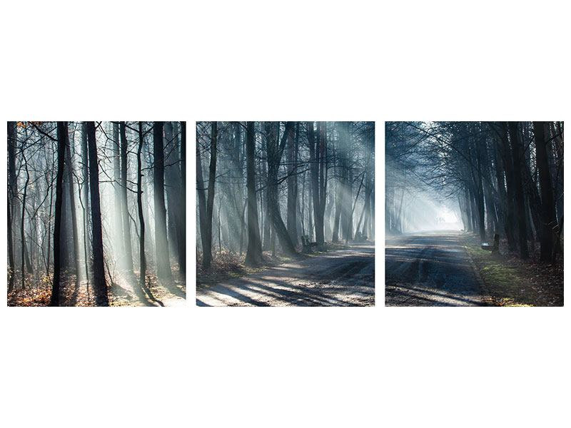 Panorama Acrylglasbild 3-teilig Wald im Lichtstrahl