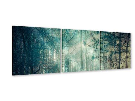 Panorama Acrylglasbild 3-teilig Pinienwald