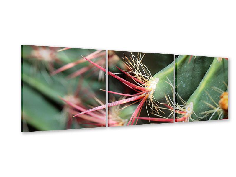 Panorama Acrylglasbild 3-teilig Die Kaktusblüte