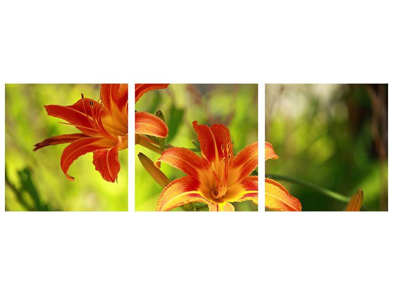 Panorama Acrylglasbild 3-teilig Lilien in der Natur