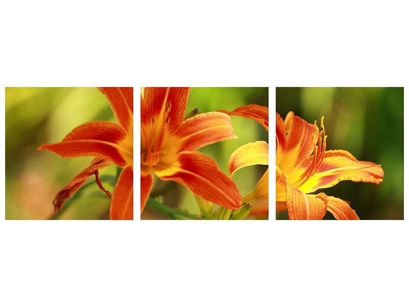 Panorama Acrylglasbild 3-teilig Natural Lilien