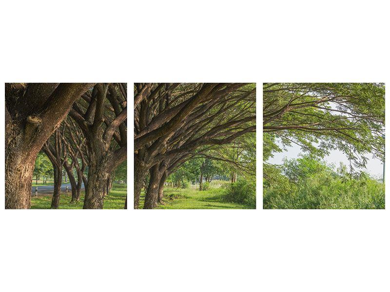 Panorama Acrylglasbild 3-teilig Alter Baumbestand
