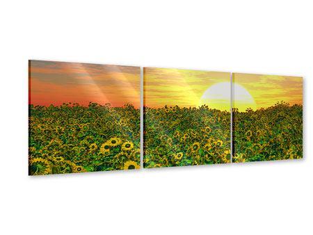 Panorama Acrylglasbild 3-teilig Blumenpanorama bei Sonnenuntergang