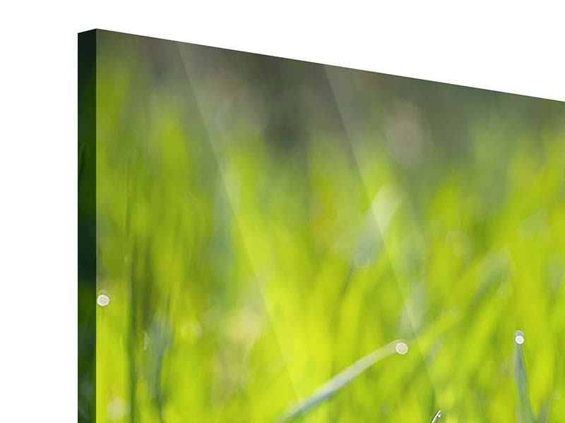 Panorama Acrylglasbild 3-teilig Gras im Morgentau