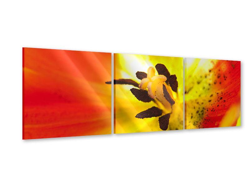 Panorama Acrylglasbild 3-teilig Die Narbe einer Tulpe XXL