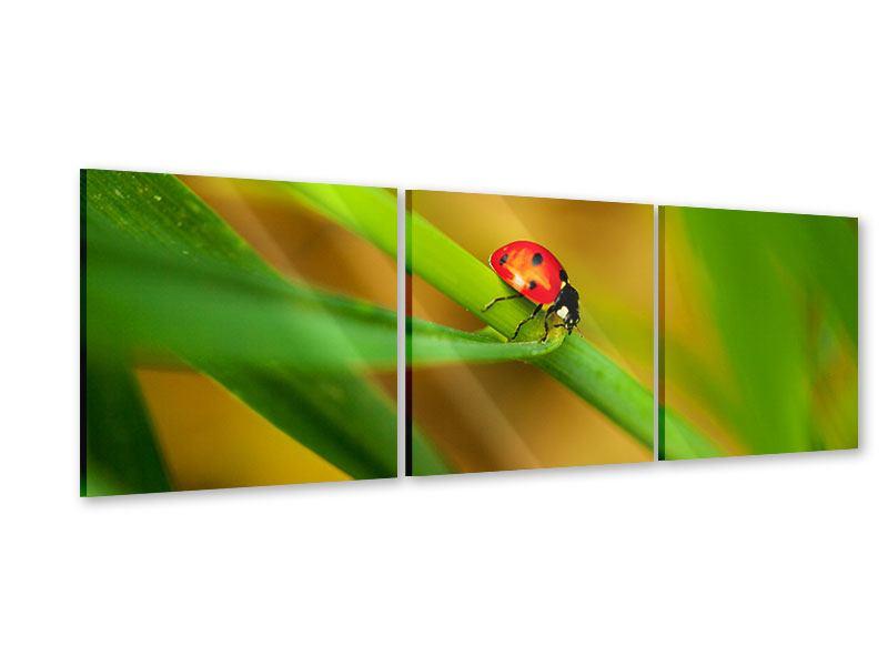 Panorama Acrylglasbild 3-teilig XXL Marienkäfer