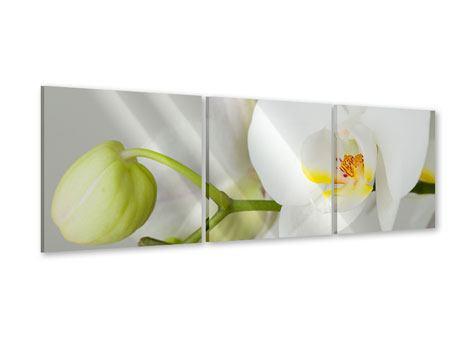 Panorama Acrylglasbild 3-teilig Riesenorchidee