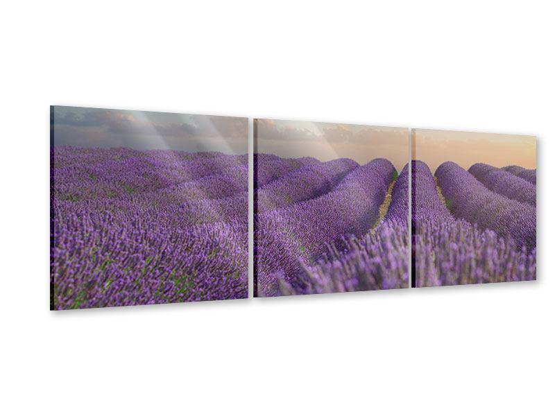 Panorama Acrylglasbild 3-teilig Das blühende Lavendelfeld