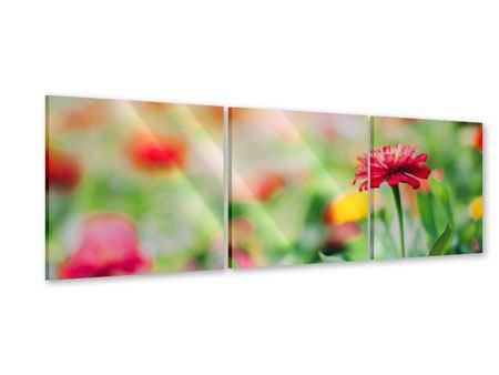 Panorama Acrylglasbild 3-teilig Im Blumengarten