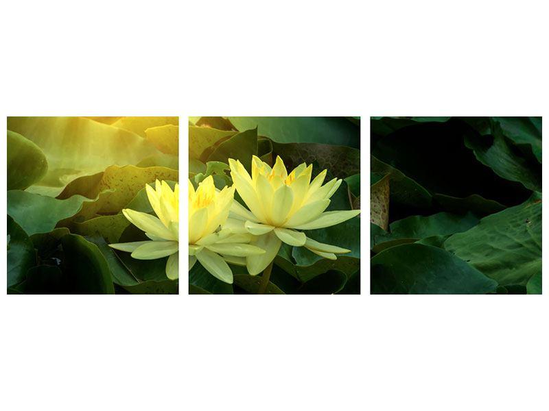 Panorama Acrylglasbild 3-teilig Wilde Lotus