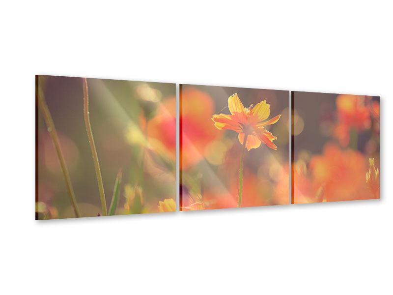 Panorama Acrylglasbild 3-teilig Blütenpracht
