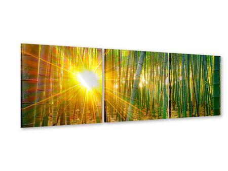 Panorama Acrylglasbild 3-teilig Bambusse