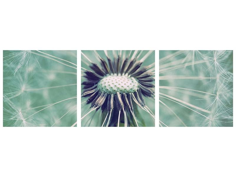 Panorama Acrylglasbild 3-teilig Close Up Pusteblume