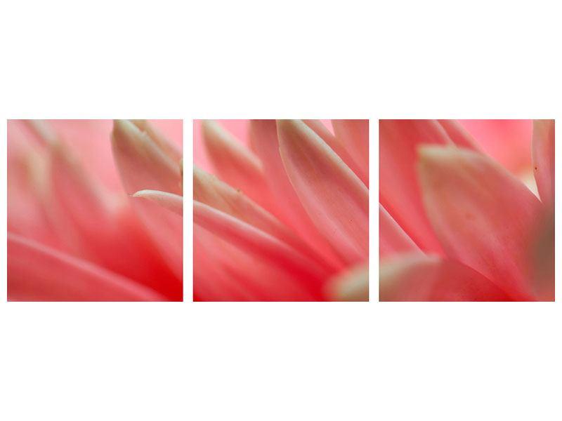 Panorama Acrylglasbild 3-teilig Close Up einer Blüte