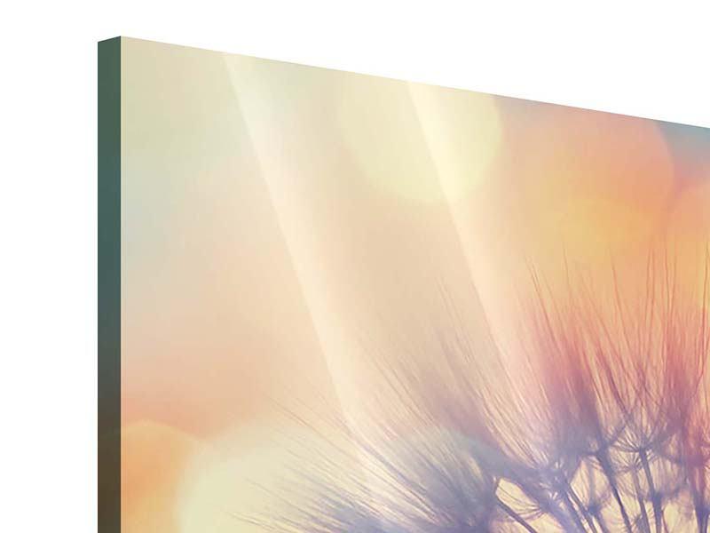 Panorama Acrylglasbild 3-teilig Die Pusteblume im Licht