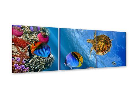 Panorama Acrylglasbild 3-teilig Fisch im Wasser