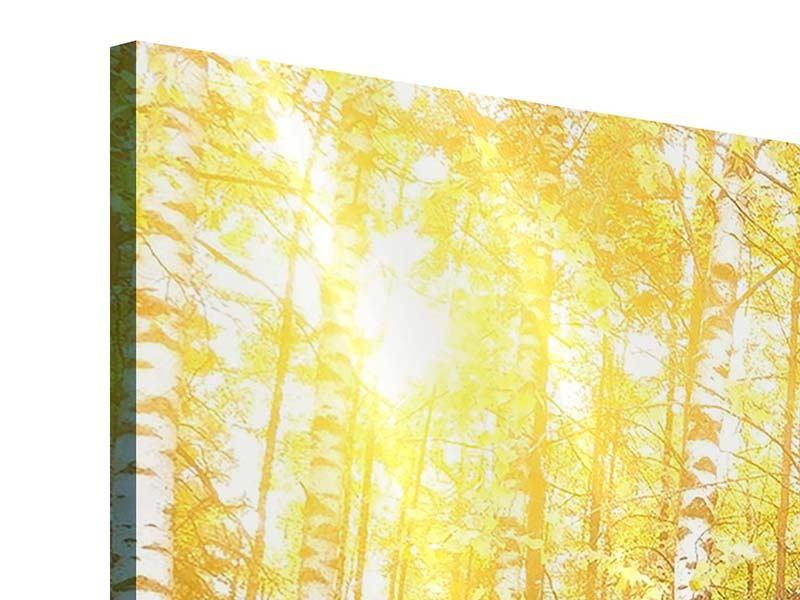 Panorama Acrylglasbild 3-teilig Birkenwald
