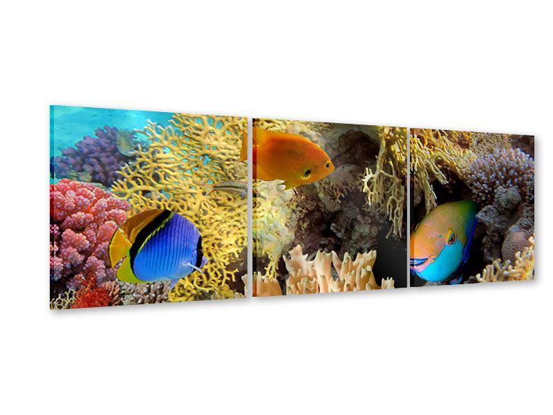Panorama Acrylglasbild 3-teilig Fischreichtum