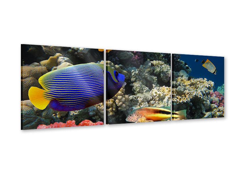 Panorama Acrylglasbild 3-teilig Das Aquarium