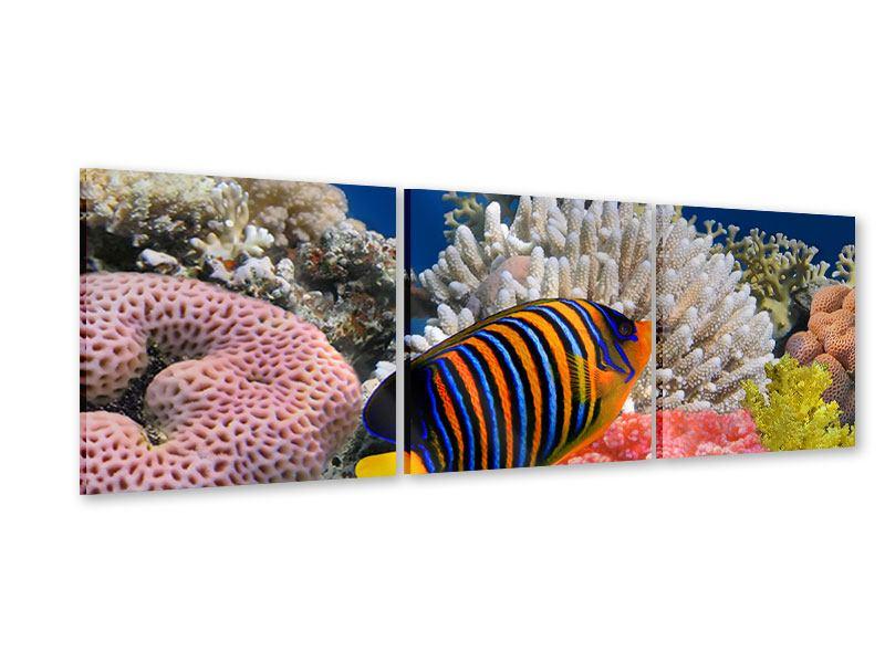 Panorama Acrylglasbild 3-teilig Mit den Fischen tauchen
