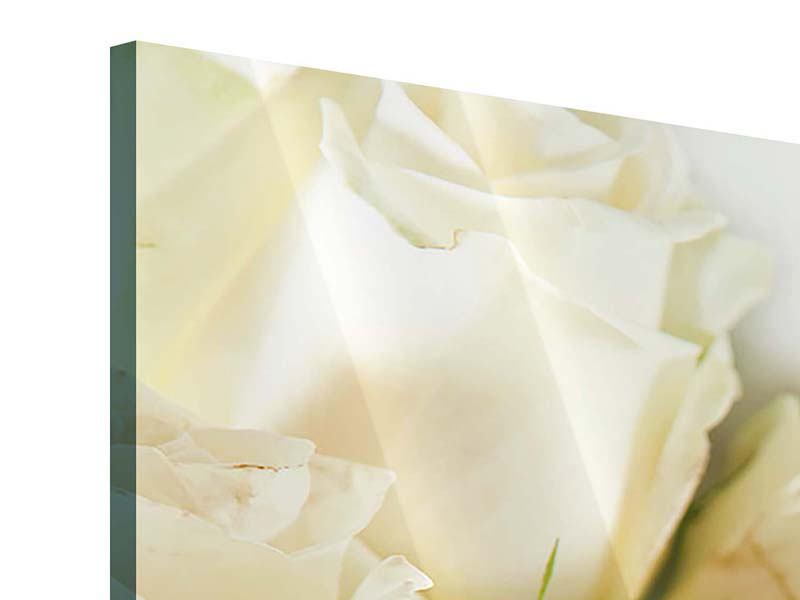 Panorama Acrylglasbild 3-teilig Weisse Rosen