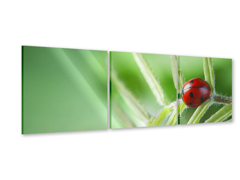 Panorama Acrylglasbild 3-teilig Marienkäfer XXL