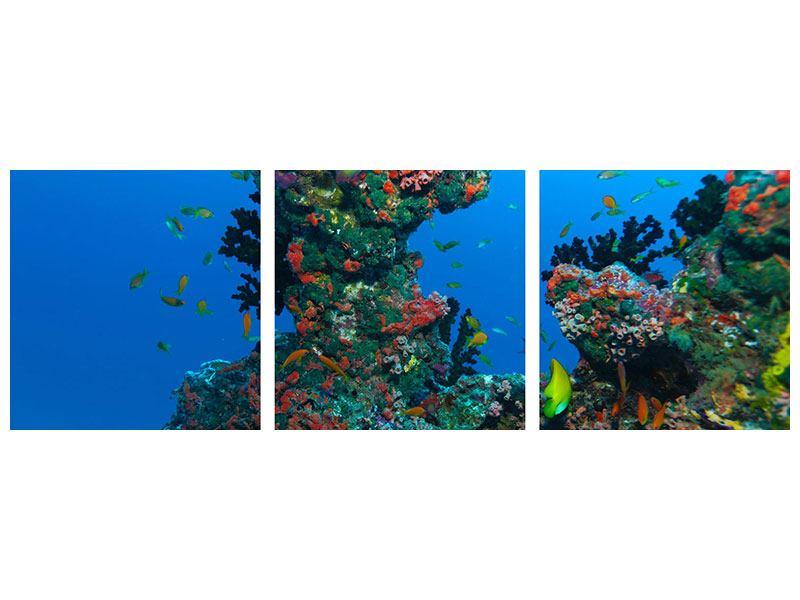 Panorama Acrylglasbild 3-teilig Die Welt der Fische