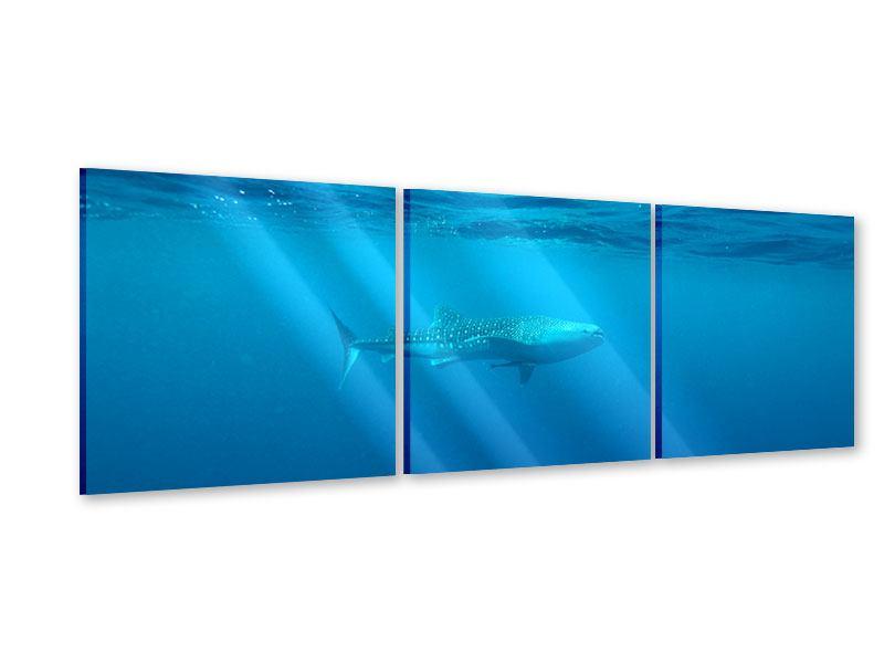 Panorama Acrylglasbild 3-teilig Der Walhai