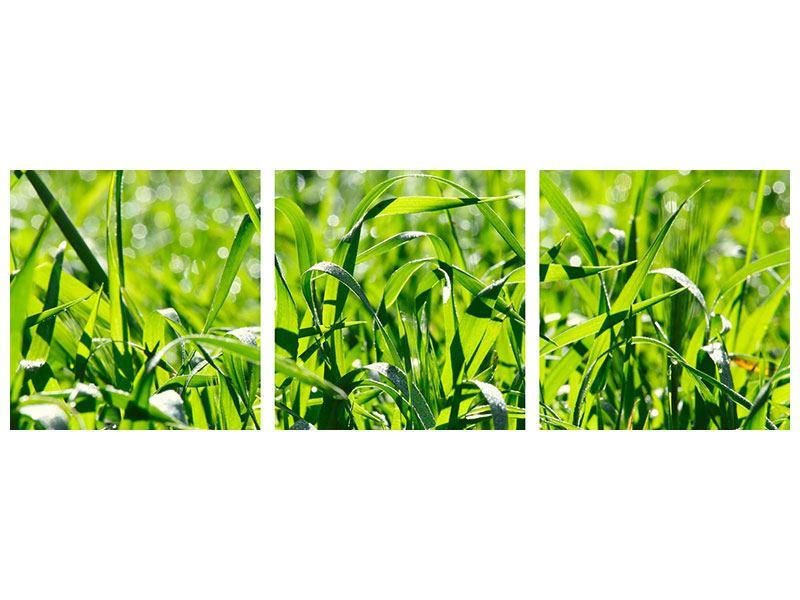 Panorama Acrylglasbild 3-teilig Sonniges Gras