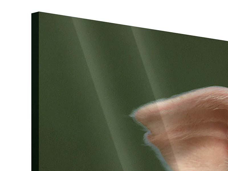 Panorama Acrylglasbild 3-teilig Schweinchen Namens Babe