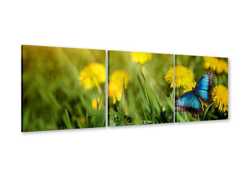 Panorama Acrylglasbild 3-teilig Der Löwenzahn und der Schmetterling