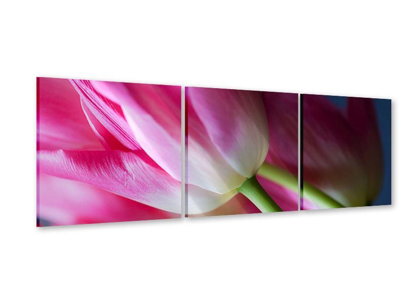 Panorama Acrylglasbild 3-teilig Makro Tulpen
