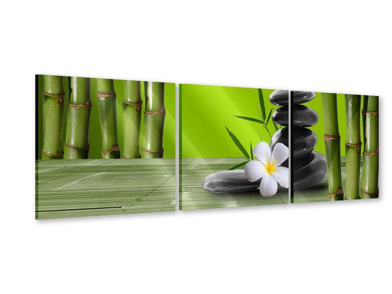 Panorama Acrylglasbild 3-teilig Der Bambus