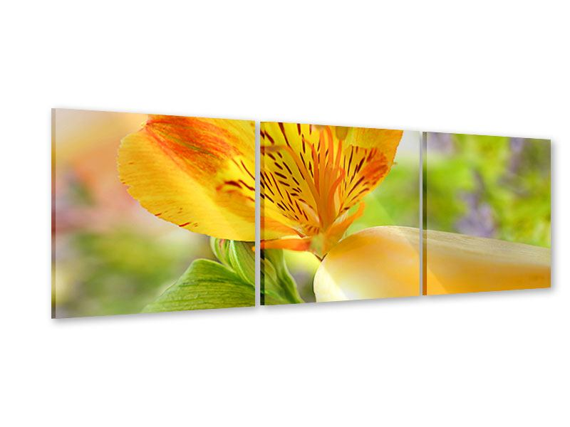 Panorama Acrylglasbild 3-teilig Lilien-Frühstück