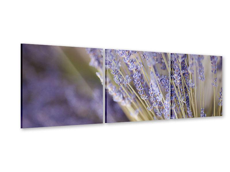 Panorama Acrylglasbild 3-teilig Lavendel XXL