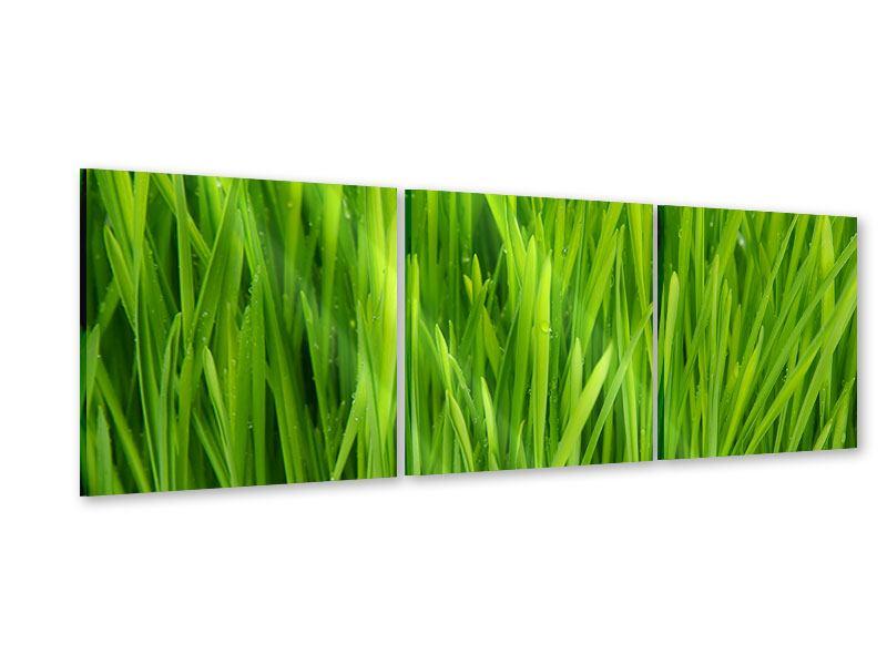 Panorama Acrylglasbild 3-teilig Grashalme im Morgentau