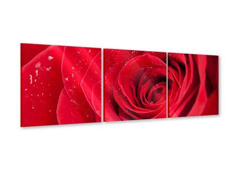 Panorama Acrylglasbild 3-teilig Rote Rose im Morgentau