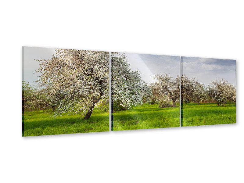 Panorama Acrylglasbild 3-teilig Apfelbaum-Garten