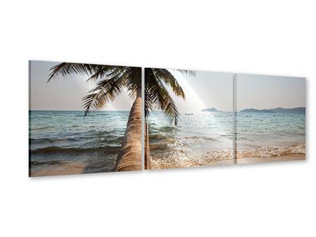 Panorama Acrylglasbild 3-teilig Palme