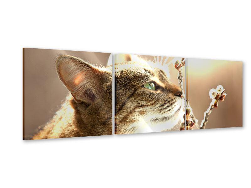 Panorama Acrylglasbild 3-teilig Die Katze