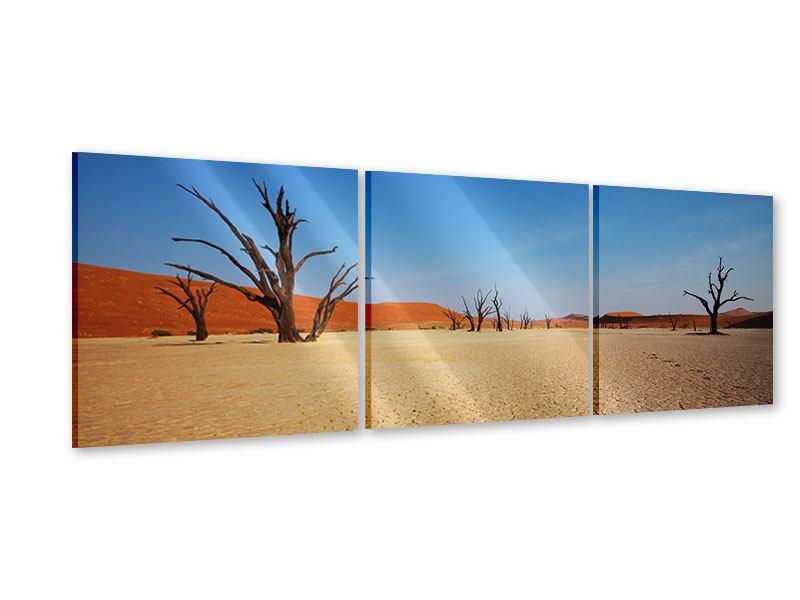 Panorama Acrylglasbild 3-teilig Wüste
