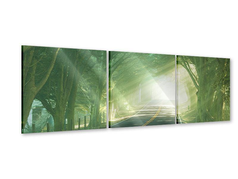 Panorama Acrylglasbild 3-teilig Die Allee