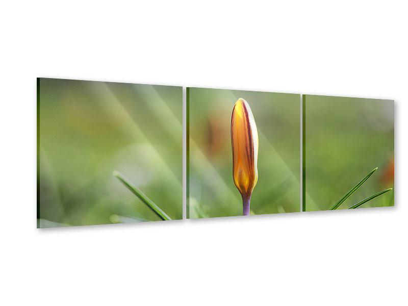 Panorama Acrylglasbild 3-teilig Die Blütenknospe