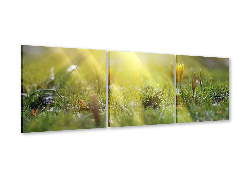 Panorama Acrylglasbild 3-teilig Blumige Wiese