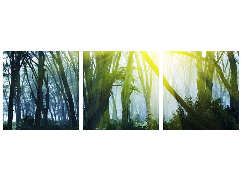 Panorama Acrylglasbild 3-teilig Sonnenstrahlen im Wald