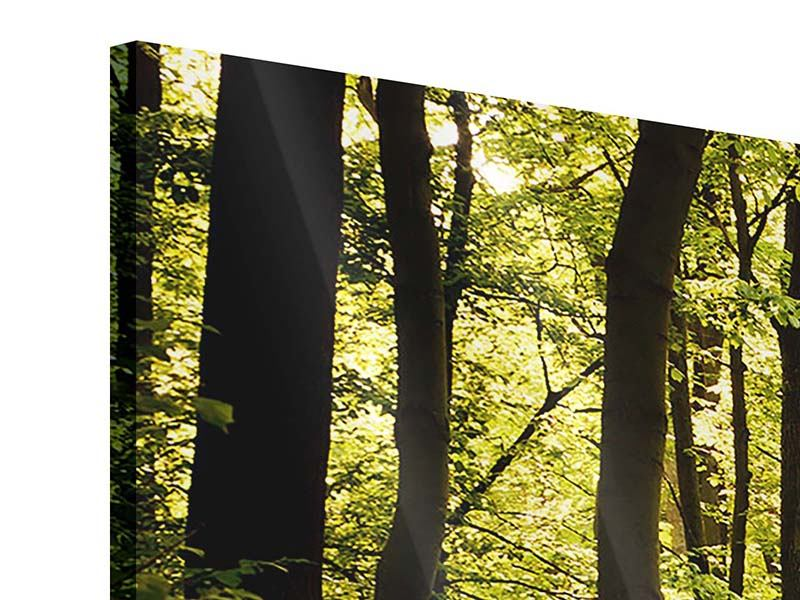 Panorama Acrylglasbild 3-teilig Sonnenaufgang im Wald