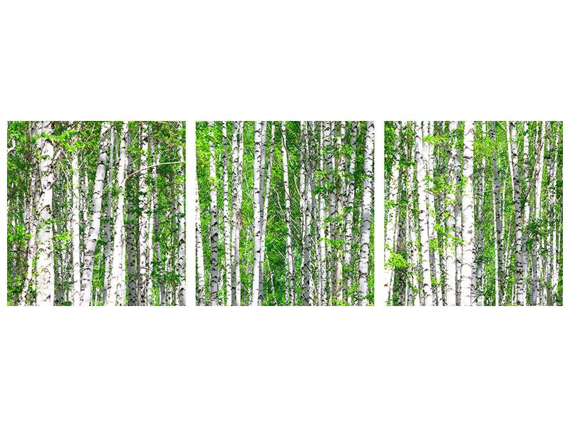 Panorama Acrylglasbild 3-teilig Der Birkenwald