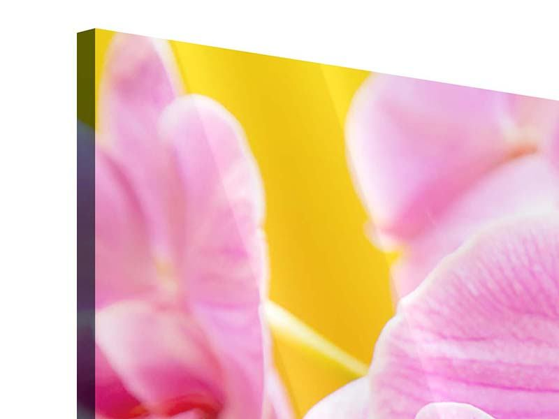 Panorama Acrylglasbild 3-teilig Königliche Orchideen
